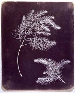 Photogramme Talbot